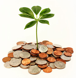 Plant growing out of the center of a pile of coins illustrating growing your savings.